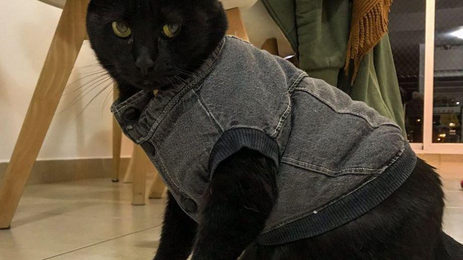 Tito se abrigó bien, para evitar pasar frío en estos días. ¡Podés sumar la foto de tu mascota a través de las redes sociales!-
