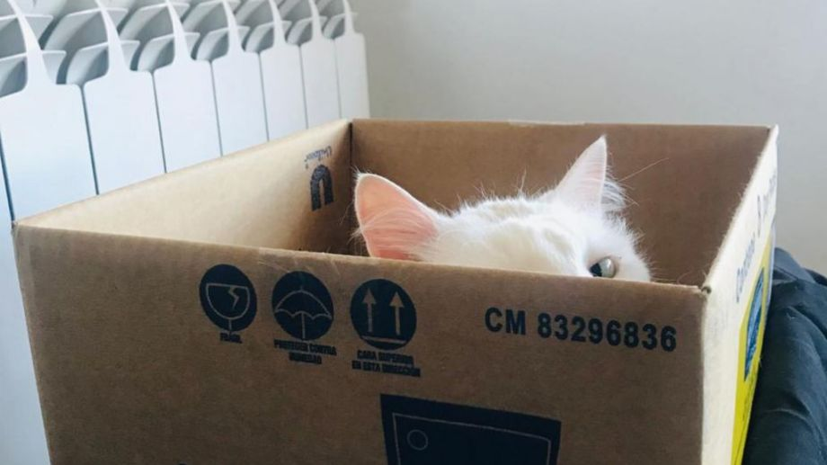 Kitty se asoma, a ver si vale la pena salir en Plottier.  ¡Podés sumar la foto de tu mascota a través de las redes sociales! -