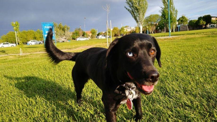 A pesar de las nubes, Luna disfruta el aire libre en Roca.  ¡Podés sumar la foto de tu mascota a través de las redes sociales!.-