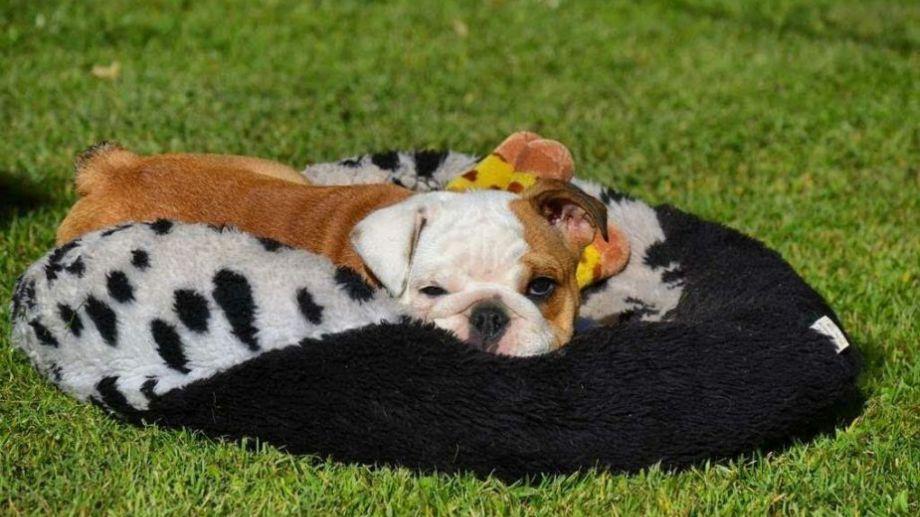 Mora quiere que vuelva el sol, para echarse en el patio.  ¡Podés sumar la foto de tu mascota a través de las redes sociales! -