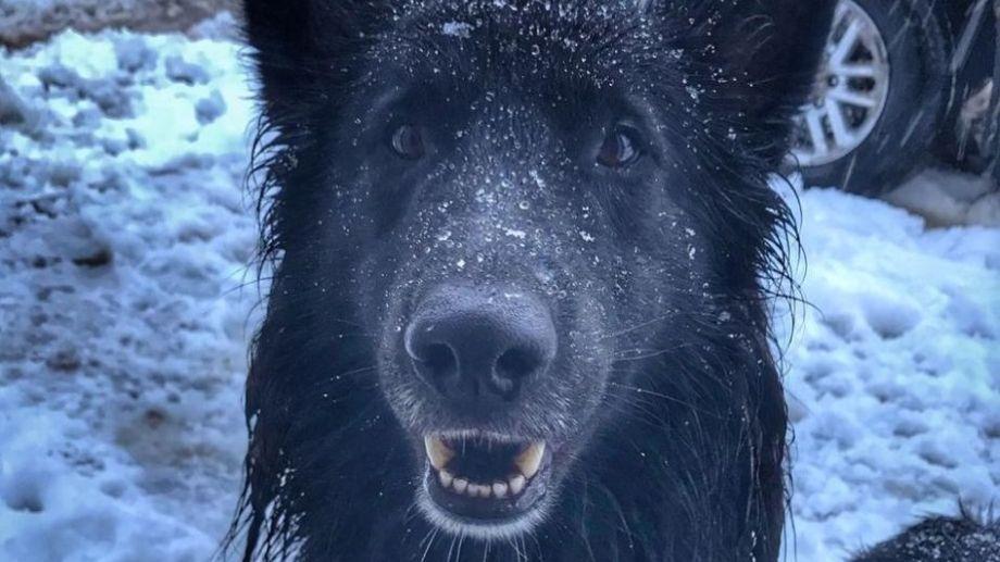 Negrito ama la nieve jacobacina. ¡Podés sumar la foto de tu mascota a través de las redes sociales! -