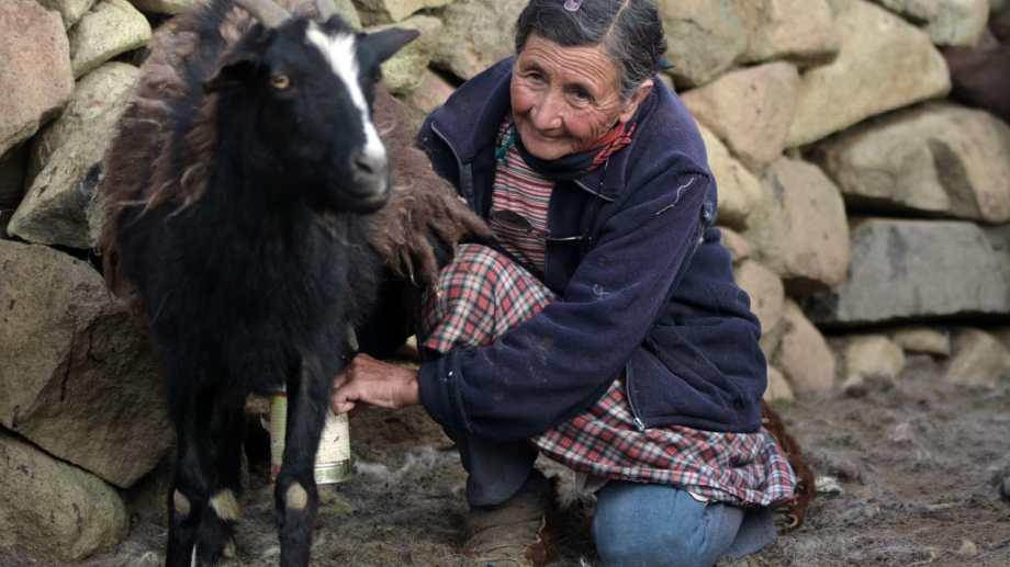 Doña Marcelina Aguilera hoy cumple 75 años en su casa en Colomichicó, en el norte neuquino. Foto: Martín Muñoz.