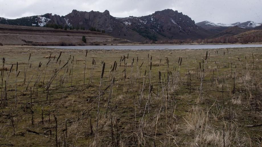 La laguna Los Juncos, en Perito Moreno, a unos 35 km de Bariloche, se quedó sin vegetación. Foto: Marcelo Martinez