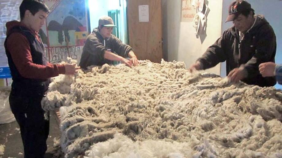 El acondicionamiento y el enfardado de la lana son procesos posteriores a la esquila de a oveja. (Foto: Gentileza)