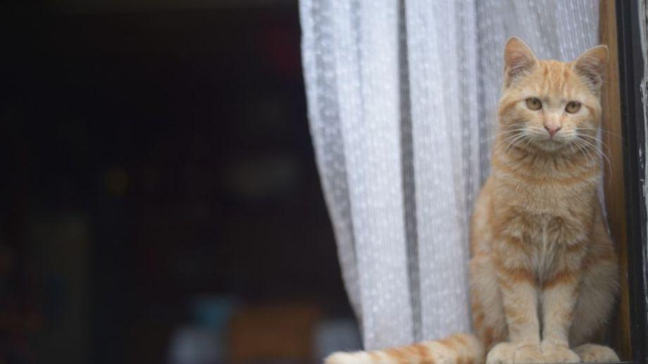 Foto: Flor Salto. ¡Podés sumar la foto de tu mascota a través de las redes sociales!-