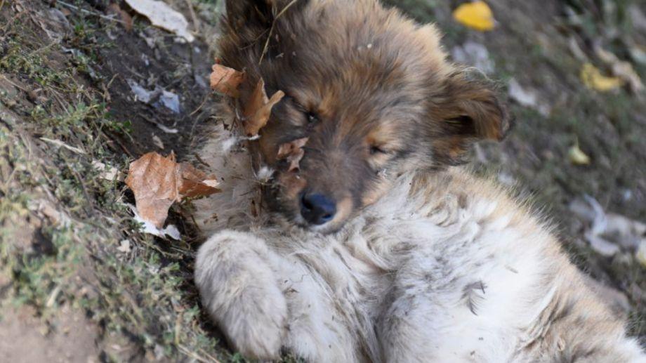 Jugar con las hojitas puede ser opción hoy. Foto: Flor Salto. ¡Podés sumar la foto de tu mascota a través de las redes sociales!-