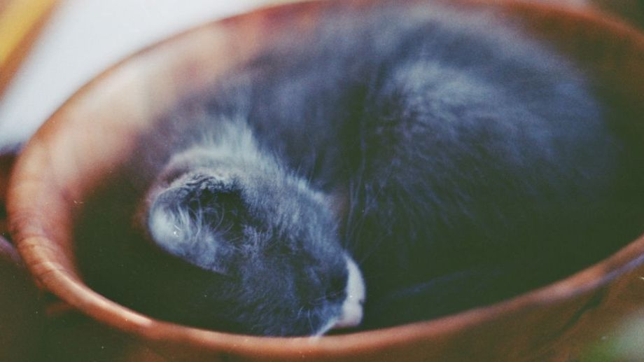 Hoy dan ganas de quedarse en la cama. ¡No te olvides! Podés sumar la foto de tu mascota a través de las redes sociales.-
