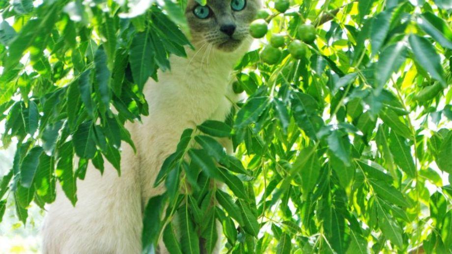 ¿Aprovechamos el solcito hoy? Foto: Flor Salto. ¡No te olvides! Podés sumar la foto de tu mascota a través de las redes sociales.-