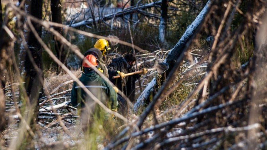 Restauran un bosque que se incendió en 2018. Se plantan nuevas especies autóctonas. (Foto: Gentileza)