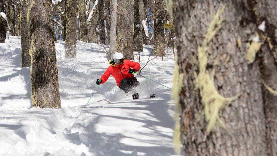 El bosque del Perito Moreno se pudo disfrutar a pleno con el esquí este invierno.  Gentileza