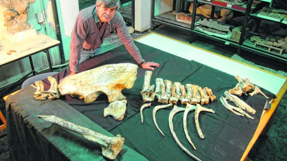 Diversidad. Coria investiga parentesco entre animales del pasado.