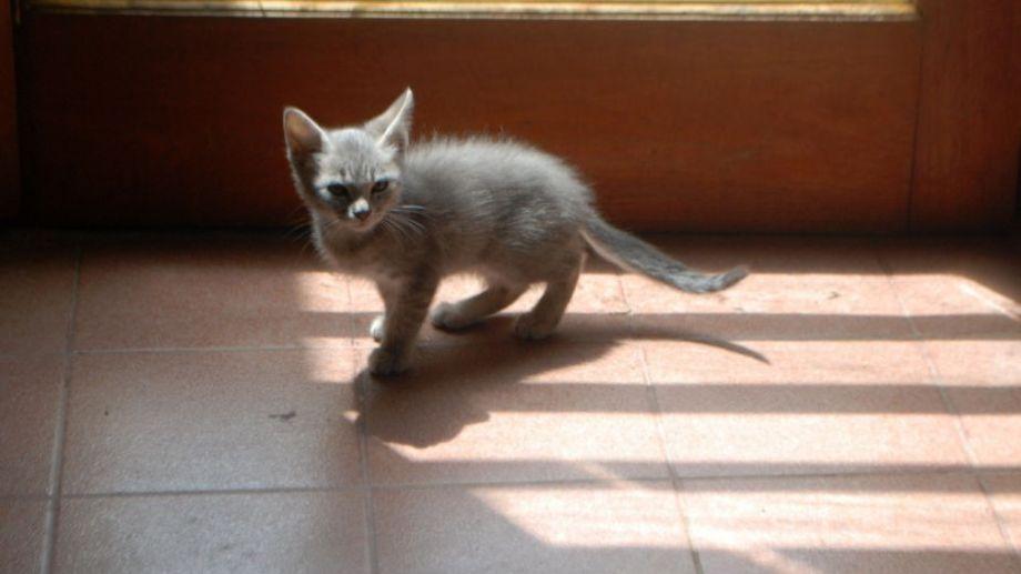 ¡No te olvides! Podés sumar la foto de tu mascota a través de las redes sociales. Foto: Flor Salto.