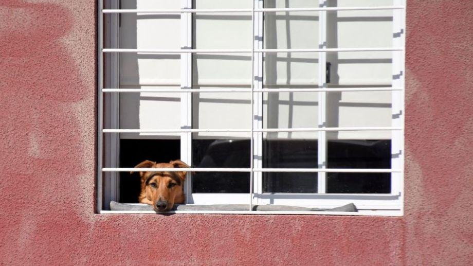 De a poco, vamos asomando la nariz. Foto: Flor Salto. ¡Acordate! Podés presentarnos a tu mascota en redes, para que salga en el pronóstico.-