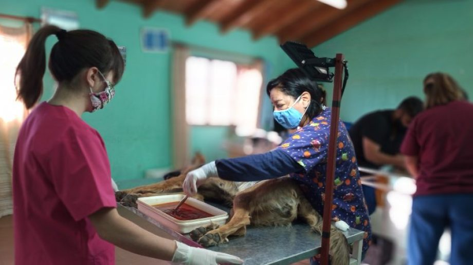 Maria  Espinosa es médica veterinaria y encabezó la jornada de castraciones. Foto: Gentileza Municipalidad de Las Lajas
