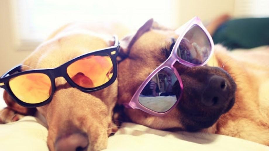 Estamos listos para disfrutar del día. ¡No te olvides! Podés mandar la foto de tu mascota para que salga en el pronóstico a través de las redes sociales. -