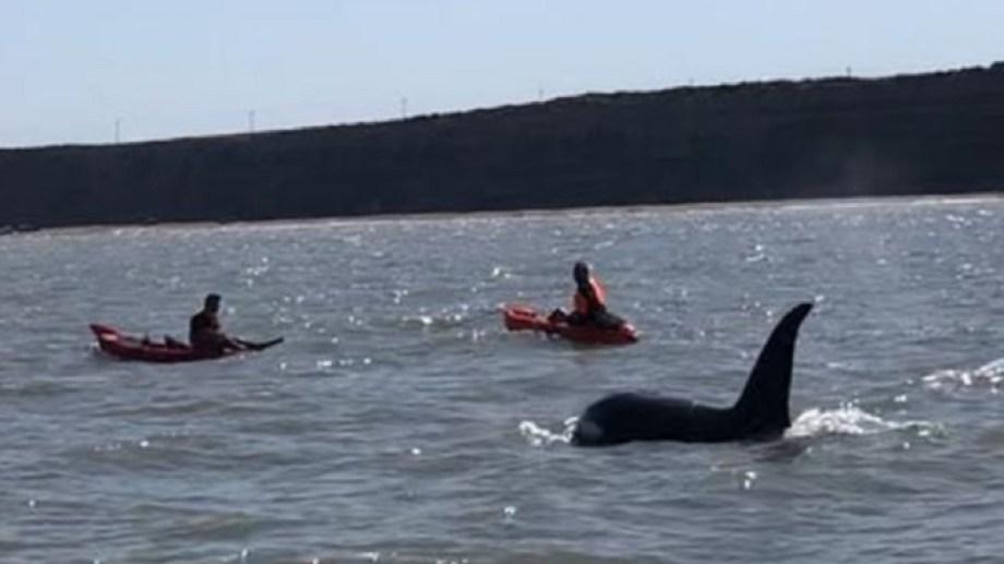 Los pescadores lograron ver a unas tres orcas. Foto Gentileza Federico Díaz.