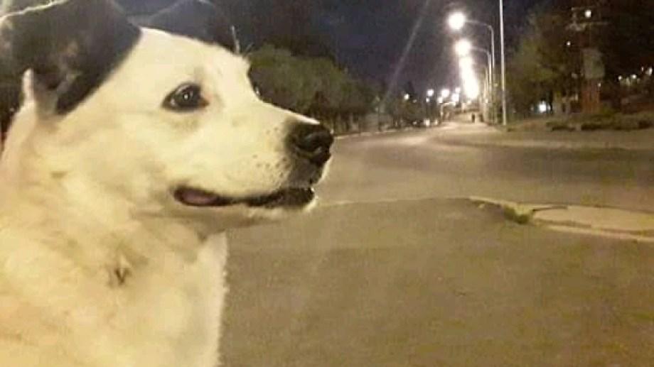Hoy saludamos a Mía, conocida en Zapala por sacarse fotos en distintos puntos de la ciudad. Acordate! Podes presentarnos a tu mascota en redes.-