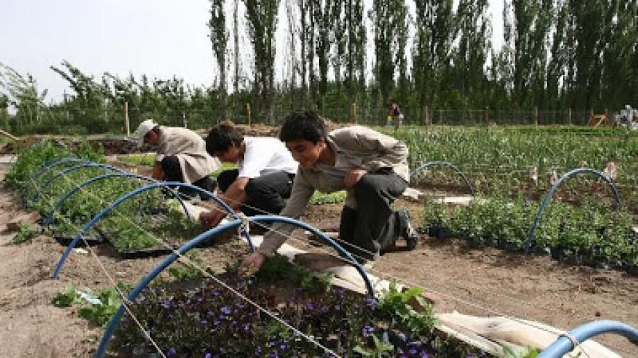 Para ayudar a la economía familiar, se propone incentivar el cultivo de huertas. (Foto archivo)