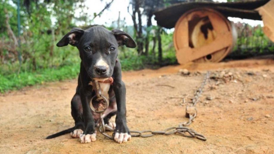 Los animales, y muy especialmente perros y gatos,  dan señales claras de que son maltratados en su actitud de temor y sumisión exagerados.