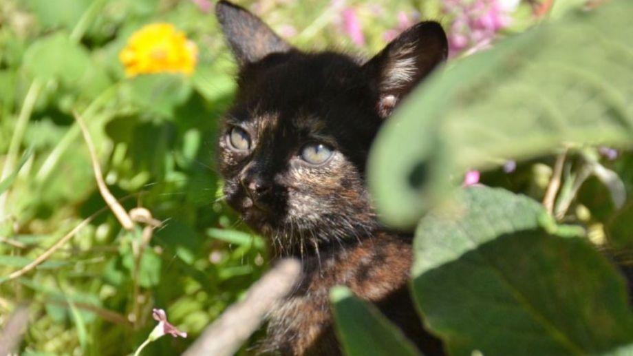 ¿Qué opinan, se instala la primavera? Foto: Flor Salto. ¡Acordate! Podés presentarnos a tu mascota en redes, para que salga en el pronóstico.-