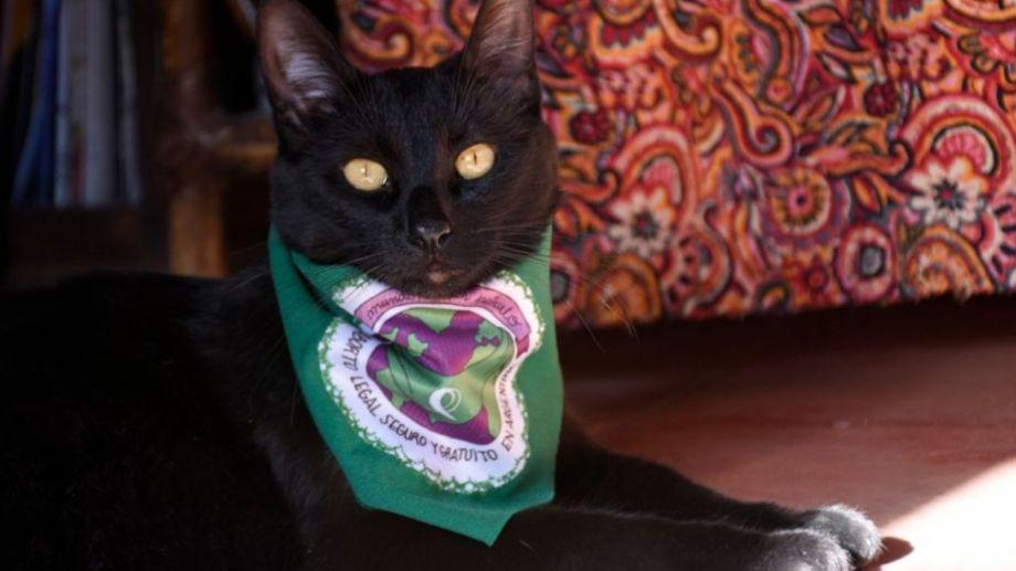 Hoy saludamos a Berta, que disfruta el sol primaveral. Acordate! Podes presentarnos a tu mascota en redes.-