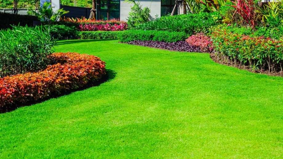 Una vez que el césped está bien tratado, decora cualquier jardín y genera una vista más que armoniosa.