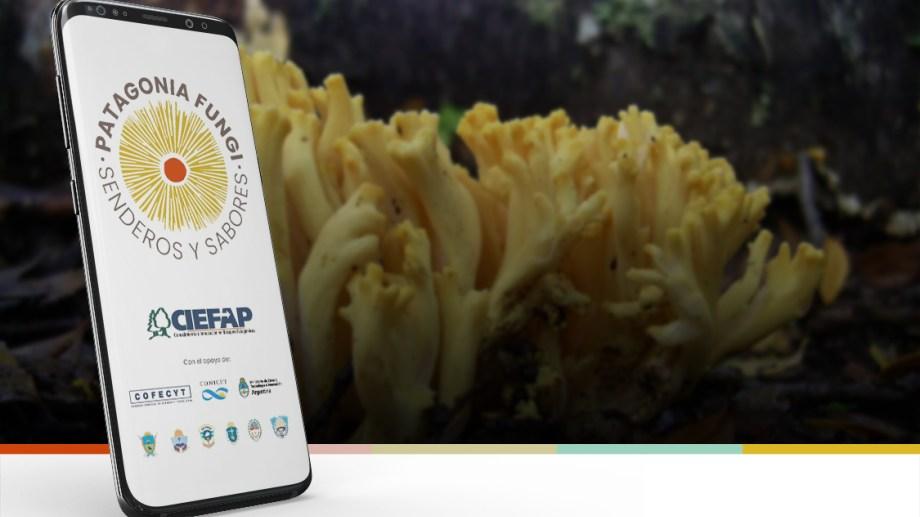 La nueva aplicación para saber si se trata de un hongo comestible. Se llama Patagonia Fungi