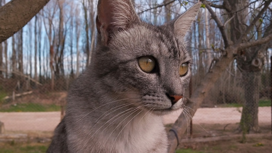 Hoy saludamos a Gaia, Tasha y Shuri, con las fotos que nos envió Camila. Acordate! Podes presentarnos a tu mascota en redes.-