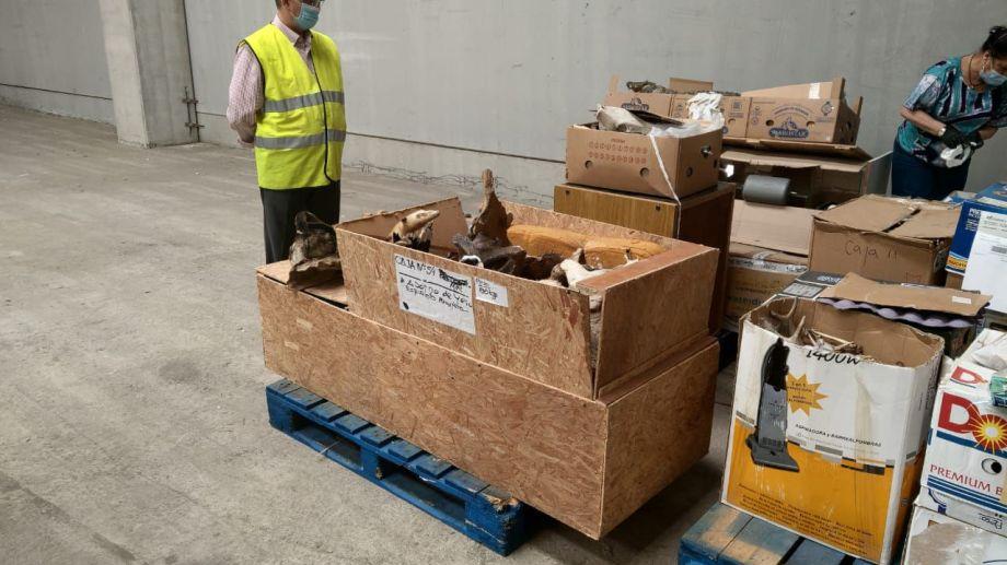Los fósiles fueron detectados por la aduana española. Foto: gentileza