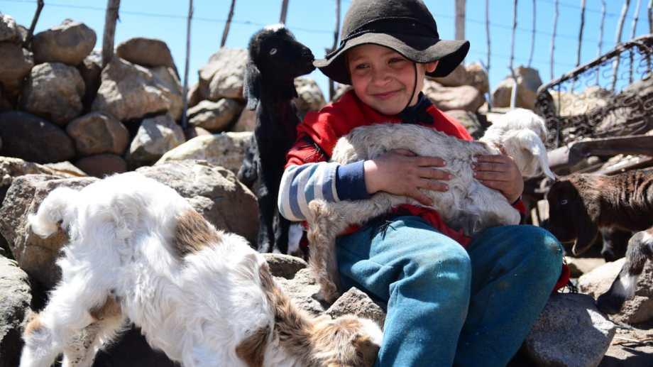 Joaco tiene seis años. Aquí, con uno de los chivitos nacidos en octubre en Las Ramadillas, a 15 km de Varvarco en el norte neuquino. Foto: Martín Muñoz.