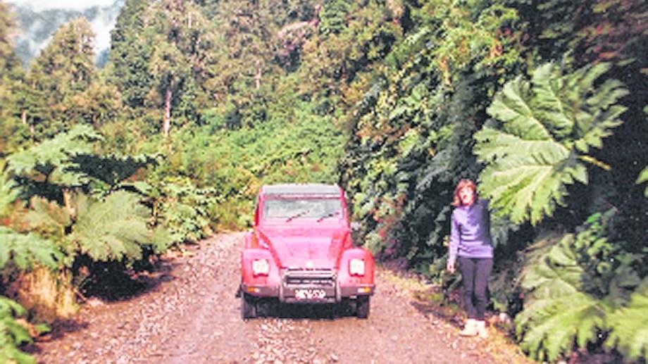 Camino enripiado entre nalcas y bosque valdiviano.
