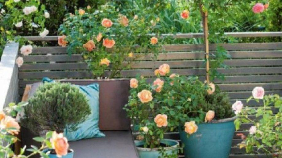 No hace falta tener un jardín. Los topiarios se lucen también en balcones y terrazas.