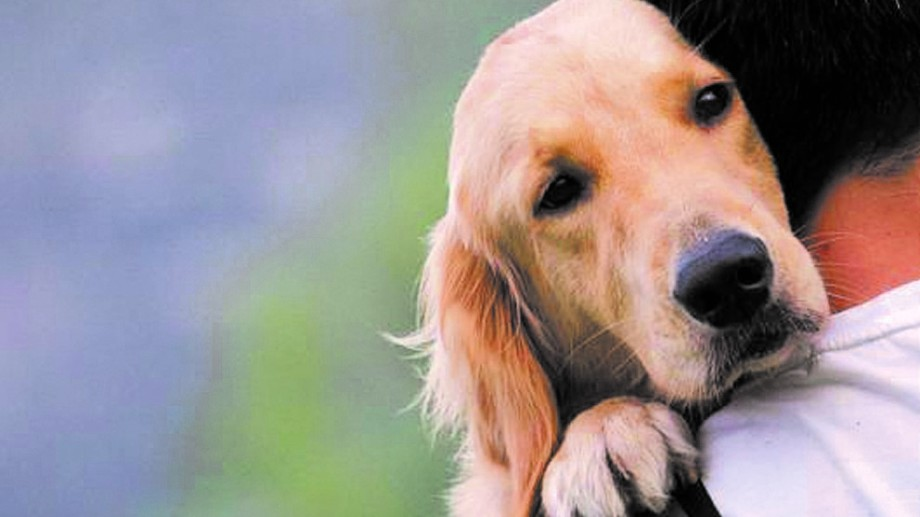 Cuidar que los perros queden en un lugar seguro donde no puedan sufrir golpes en la cabeza y lastimarse. Evitar hacer ruidos.