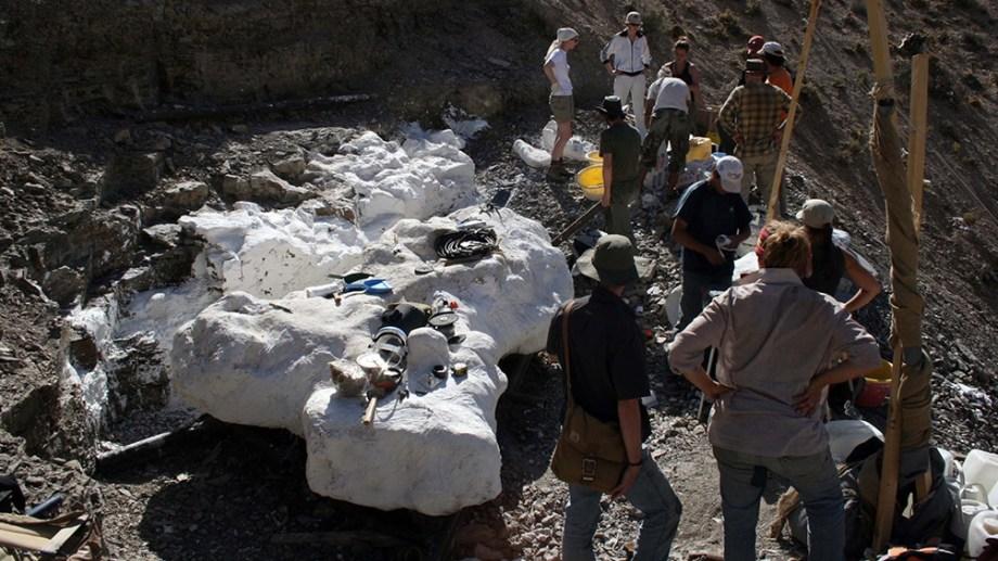 El descubrimiento del cráneo y cientos de huesos fue en 2008, y los trabajos de campo comenzaron a realizarse en 2010.