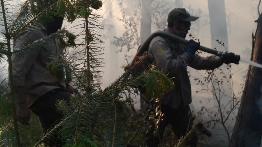 El fuego afectó vegetación en la zona de Lago Gutiérrez y puso en riesgo viviendas. Gentileza Parques Nacionales