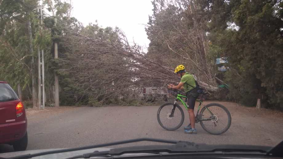 El árbol caído en Parque Norte.Foto: Gentileza