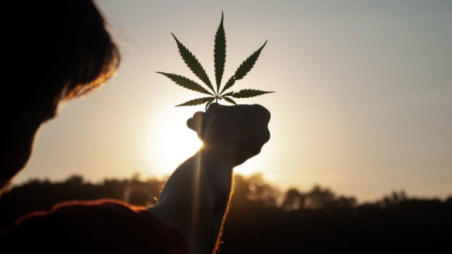 Más de 50 países han adoptado programas de cannabis medicinal como Argentina. Canadá, Uruguay y 15 estados de Estados Unidos han legalizado su uso recreativo.  (Crédito: Unsplash/David Gabrić)