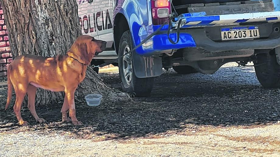 El rastreo que puedan realizar los animales entrenados es fundamental para encontrar algún indicio que lleve a revelar qué le pasó y donde está el suboficial.