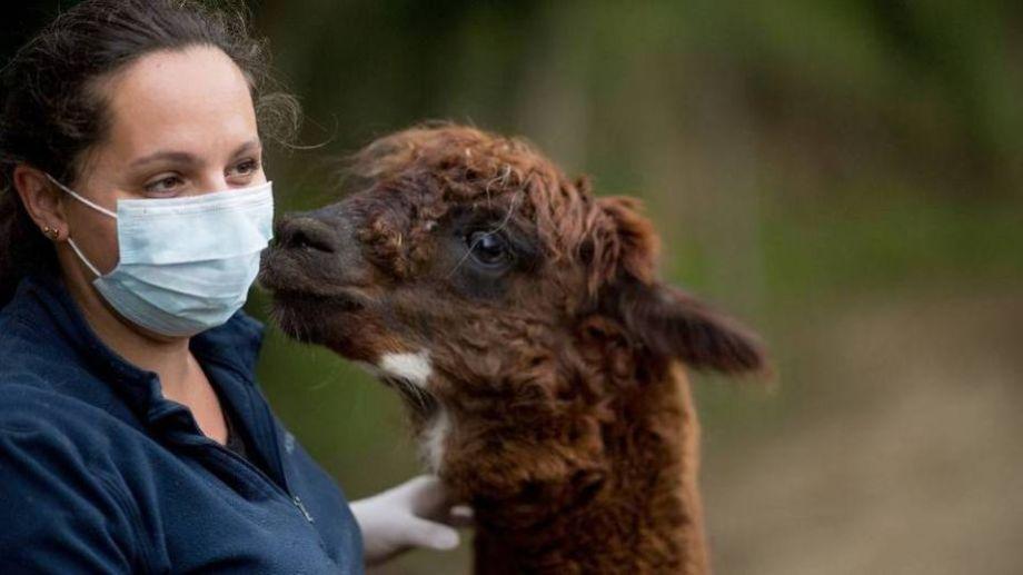 Unos 50 animales fueron atacados y hay preocupación. Foto: AFP.-