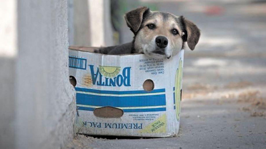 Los perros están en la calle es a causa de la irresponsabilidad de los humanos.