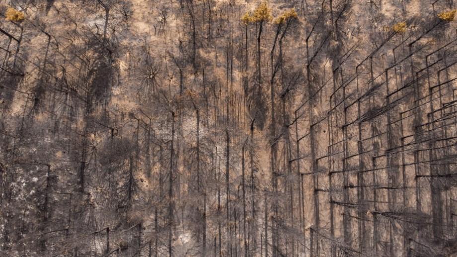 El incendio forestal cerca de El Bolsón comenzó el 24 de enero. Foto: archivo