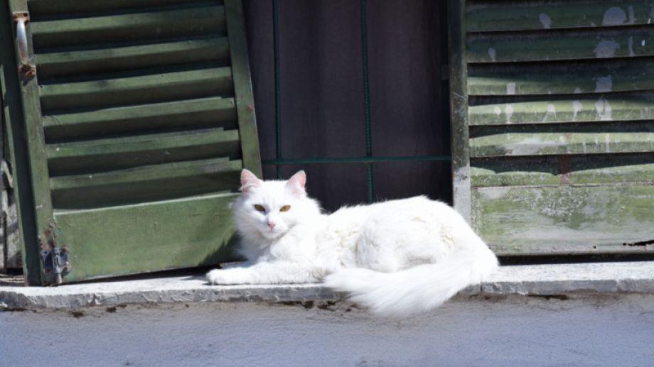 Hoy saludamos a un michi remolón que le gusta el sol. ¡Acordate! Podés seguir mandando las fotos de tu mascota.-