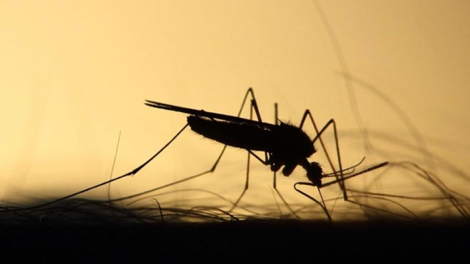 """La Sociedad Argentina de Pediatría alertó sobre el riesgo que el dengue implica en los niños y pidió """"consulta inmediata"""" si aparecen síntomas."""