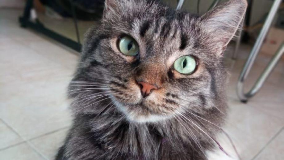 Hoy saludamos a la gata Mochi, que posó para la foto del día. Acordate que podés seguir enviando las de tu mascota por redes!.-