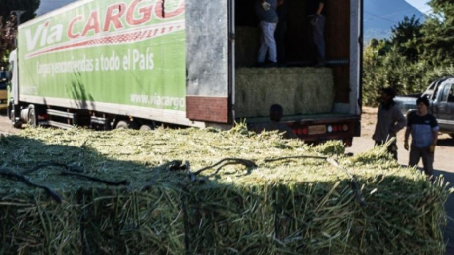 La descarga de la alfalfa.
