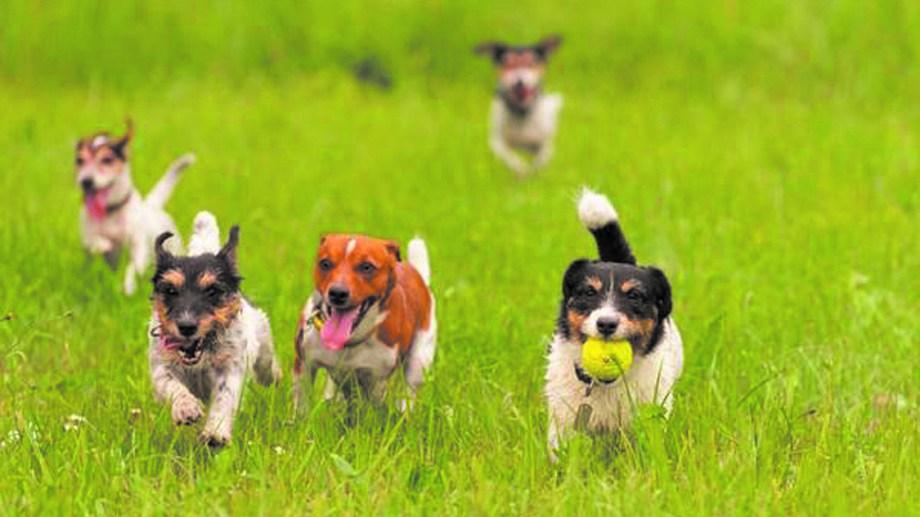 Socializar y compartir actividades con otros perros es una manera de educación saludable.