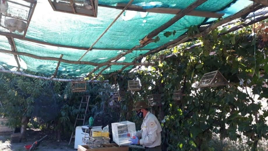 Por una denuncia de la Dirección de Fauna, secuestraron 45 aves silvestres en cautiverio en Chichinales. (Foto gentileza)