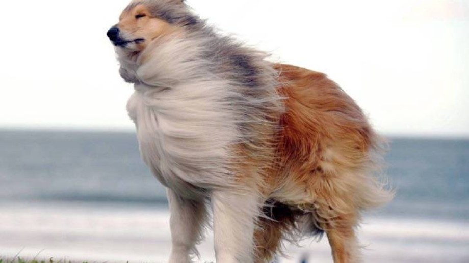 Pelos al viento hoy.-