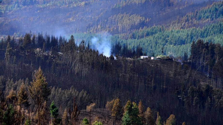 """Las plantaciones de pinos hacen que los incendios sean mucho """"más voraces"""". Foto: Chino Leiva"""