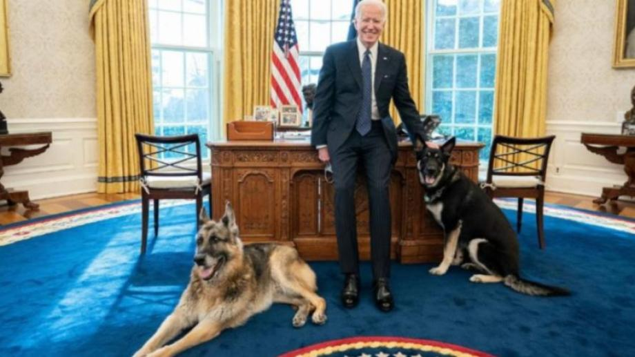 Un perro de Biden mordió a una persona.